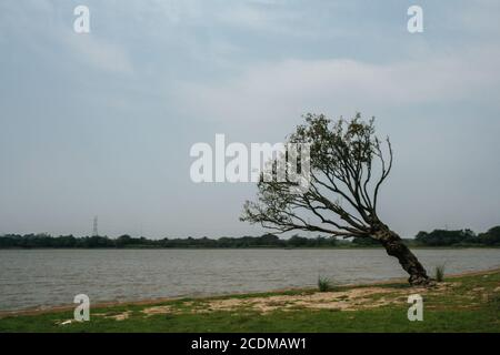 Villa Florida, Paraguay. 9th September, 2007. A general view of twisted and curled tree standing on a riverside along the Tebicuary River on the border of Paraguari and Misiones Department, in the Eastern Region (Region Oriental) of Paraguay. - Stock Photo