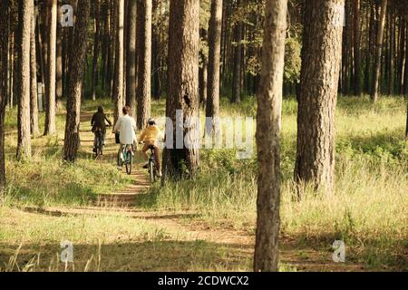 Back view of contemporary active family of three moving on bicycles in forest - Stock Photo