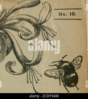 . The Entomologist's record and journal of variation . THE ENTOMOLOGISTS RECORD AND JOURNAL OF VARIATION Edited by J. W. TUTT, F.E.S. OCTOBER 15th, iSgy.