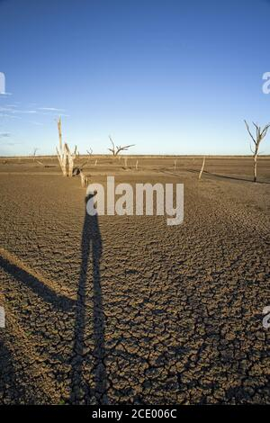 Dead trees at the wasteland of Lake Argyle at sunset with blue sky as background at the outback in Australia with long shadow of - Stock Photo