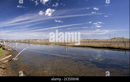 Dead trees at the swamp of Lake Argyle at the swampland with mountains in the background at the outback in Australia – wallpap - Stock Photo