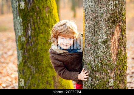 Outdoor autumn kids portrait. Cute little kid boy enjoying climbing on tree. Child in autumnal clothes learning to climb, having fun in forest or park