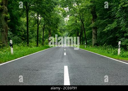 An empty blacktop two-lane road in deep lush green forest with copy space