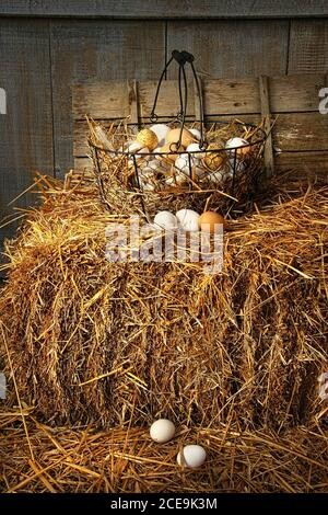 Basket of freshly laid  eggs lying on straw in the