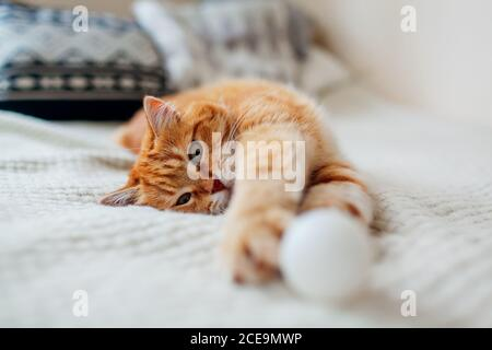 Ginger cat playing with ball on couch in living room at home. Pet having fun on blanket