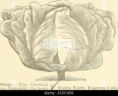 . Bolgiano's 1902 catalogue : tested seeds for the garden and farm. - until a favorable opportunity for cutting. Packets,5c. and ioc. Ounce, 20c. 2 ounces, 35c. J+ pound, 50c. Pound, 51.75..