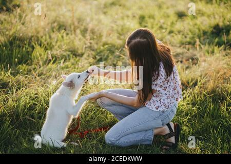 Woman training cute white puppy to behave  in summer meadow in warm sunset light. Adorable fluffy puppy giving paw to girl owner and having treat. Ado