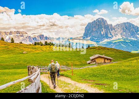 Two elderly men hiking at Seceda peak in the background view of the mountain Sassolungo or Longkofel Traveling to village St. Cristina di Val Gardena - Stock Photo