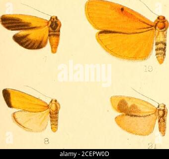 . Catalogue of the Lepidoptera Phalænæ in the British museum. -^-..^. ^ - Stock Photo