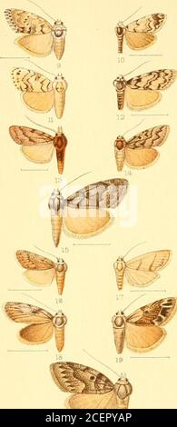 . Catalogue of the Lepidoptera Phalænæ in the British museum. - Stock Photo