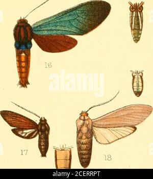 . Catalogue of the Lepidoptera Phalænæ in the British museum. 18a - Stock Photo