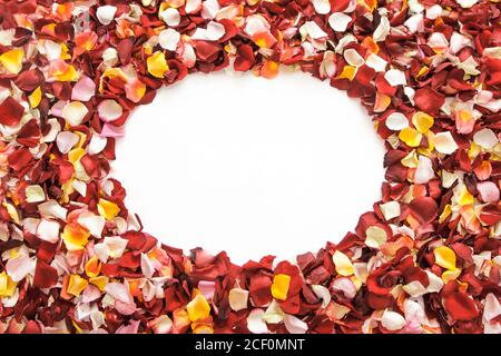 Colorful fresh rose petals in the shape of a circle on white background with space for text. - Stock Photo
