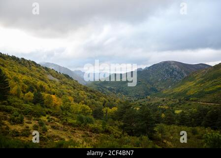 Lush trees with yellow green foliage growing in calm serene valley in mountain under cloudy sky - Stock Photo