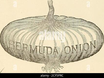 . Bolgiano's 1902 catalogue : tested seeds for the garden and farm. NEW 1901 CROP BERMUDA ONION SEED. J. luo ^^ ... ^.