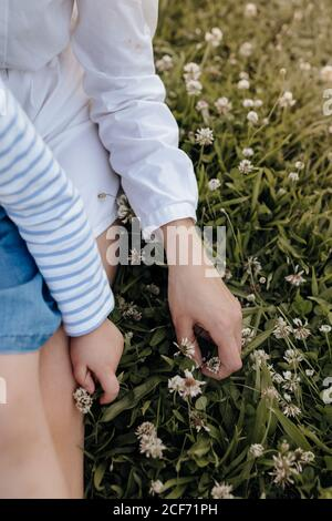 From above anonymous woman and girl sitting on green lawn with white flowers while spending time in park together - Stock Photo