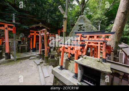 Red torii gates and stone sculptures in ancient Shinto shrine surrounded with green forest in Japan