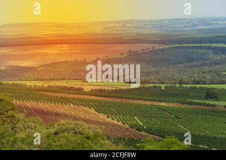 Coffee plantation farm in the mountains landscape on a claudy day - Stock Photo
