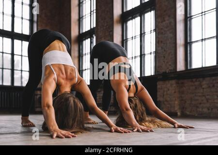 Two young women do complex of stretching yoga asanas in loft style class. Adho Mukha Svanasana - downward dog Pose.