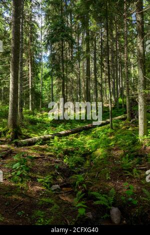 Scene at hiking trail in Nuuksio national park, Espoo, Finland.