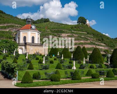 Vineyard with park garden in Saxony - Stock Photo