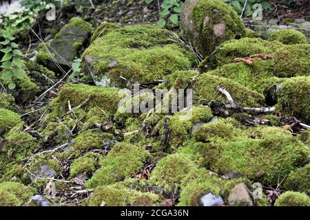 Vivid green moss growing on the small pile of stones  in the forest in Switzerland near tourist path leading to village Urdorf during summer. - Stock Photo
