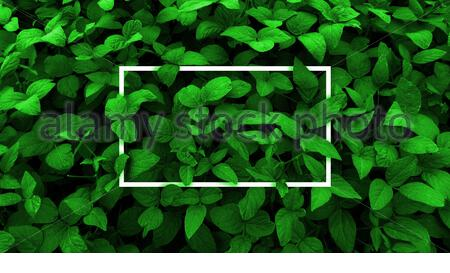 Leaves background . Creative layout made with green leaves background, square frame.This is a blank for advertising card. Nature concept.Autumn poster - Stock Photo