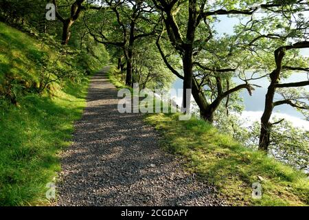Morning Sunshine on  the Tree Lined Track by the side of Brothers Water Lake in the Lake District National Park, Cumbria, England, UK. - Stock Photo