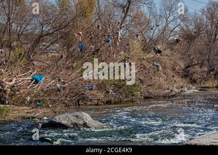 Plastic bags and other trash get caught and accumulate in trees and shrubs along the Los Angeles River at the Glendale Narrows. Urban runoff carries a Stock Photo