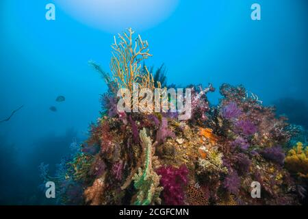 A lot of colorful soft corals cover the artificial fish reef against the background the sun light.