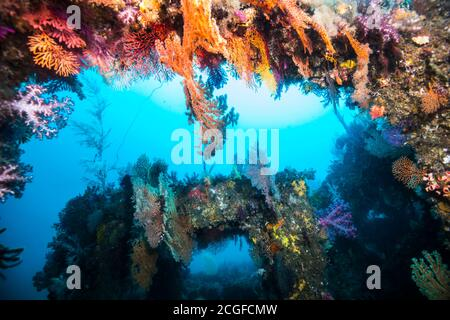 A lot of colorful soft corals cover the artificial fish reef (inside) against the background of the blue water.