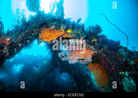 A lot of colorful soft corals cover the artificial fish reef against the background of the sun light.
