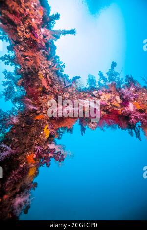 A lot of colorful soft corals cover the artificial fish reef (inside, right above) against the background of the blue water.