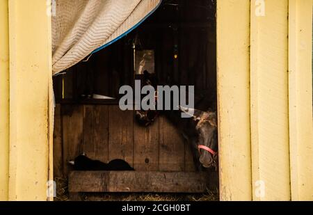 Cute donkey in barn small horse farm - Stock Photo