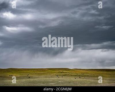 Rain storm over cow pasture, Laramie Wyoming USA - Stock Photo
