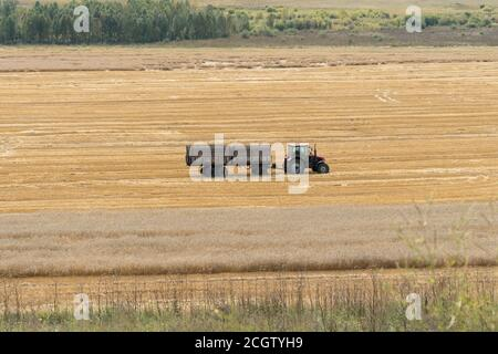 A tractor with a trailer rides through a grain field during harvest in the fall. - Stock Photo
