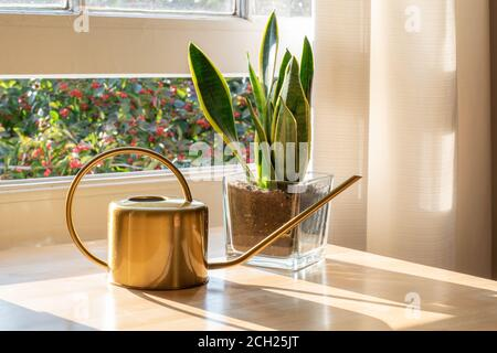 A sansevieria trifasciata snake plant in the window of a modern home or apartment interior. - Stock Photo