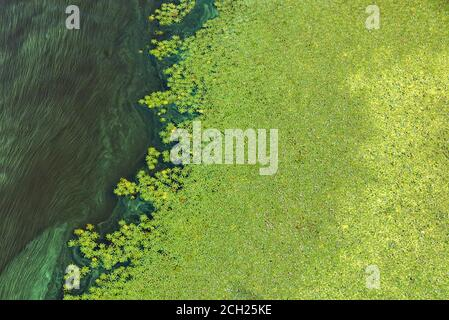 Green algae gradually cover the surface of the blooming water, the concept of pollution of the water surface of the earth, copy space.