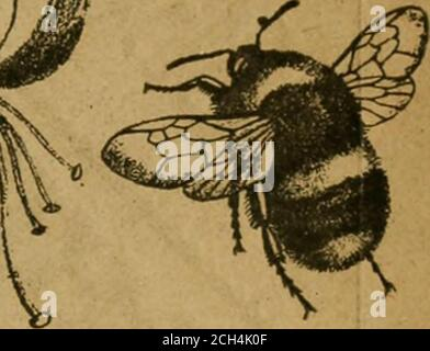 . The Entomologist's record and journal of variation . THE AND No. 11.. ENTOMOLOGISTS RECORD JOURNAL OF VARIATION. Edited by J. W. TUTT, F.E. S.