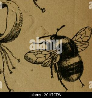 . The Entomologist's record and journal of variation . lia^-a-^- <^. l,JUN-.3i,1892;THE ENititiiOGi8T8 Record jp^/i JOURNAL OF VARIATION. Edited by J. W. TUTT, F.E.S. MAV i6l/i, 1892.