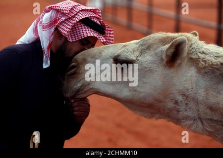 A man kisses a camel during the King Abdulaziz Camel Festival in Rimah Governorate, north-east of Riyadh, Saudi Arabia March 29, 2017. REUTERS/Faisal Al Nasser - Stock Photo