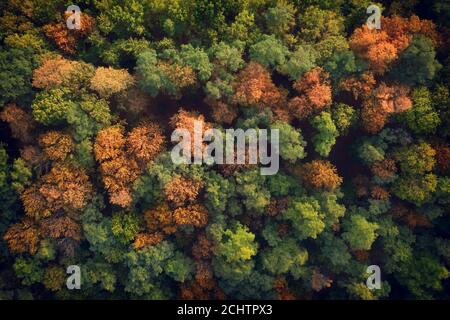 Deciduous autumn forest, aerial view, pattern or texture. - Stock Photo