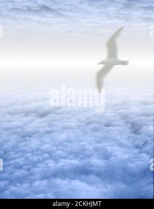 White Bird in Clouds