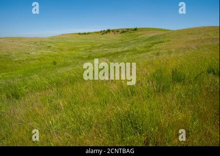A remaining patch of original prairie near Steptoe Butte in Whitman County in the Palouse, Washington State, USA. - Stock Photo