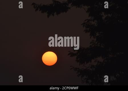 Hazy, smoke-filled sky from California and Oregon wildfires, with surreal, setting sun viewed through tree branches, Browntown, Wisconsin, USA - Stock Photo
