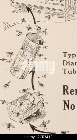 . Baltimore and Ohio employees magazine . All flies are harmful. A pairof flies born now may breedmillions by August. ^m^n Kill the. First Pair Flies Transmit: Typhoid Fever DysenteryDiarrhoea AnthraxTuberculosis Cholera Remember: No Filth,No Flies, Less Disease - Stock Photo