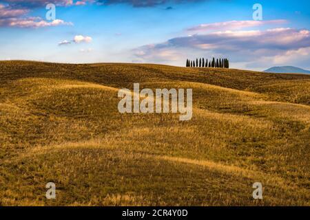 Europe, Italy, San Quirico, Tuscany, Tuscan Landscape, Cipressi di San Quirico d'Orcia, Province of Siena,