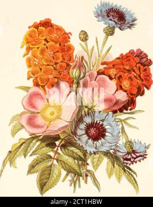 . The language of flowers, or, Floral emblems of thoughts, feelings, and sentiments . ////// /III//// /ln(> /,oxr (i(i/-t/i// . lii(nni//r - Stock Photo