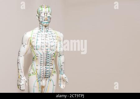 Oriental Medicine model in hospital. Plastic male acupuncture model. Traditional Chinese medicine. It is most often used to attempt pain relief - Stock Photo