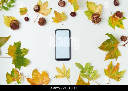 Hello autumn. autumn background with leaves, chestnuts and smartphone blank screen on white background. - Stock Photo