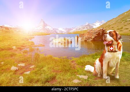 Saint Bernard rescue dog with a keg of brandy in Stellisee Lake with Matterhorn Peak. Mount Cervin of Swiss Alps reflected in Stellisee lake by - Stock Photo